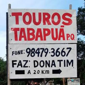 Touros tabapuã | Fazenda Dona Tim